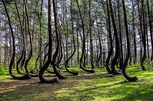 Khu rừng nhảy múa tại Ba Lan