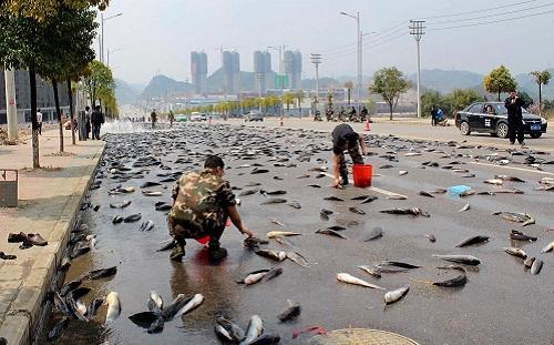 Mưa cá tại Ethiopia