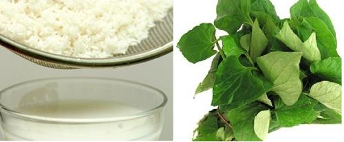 Trị ho hiệu quả bằng nước rau diếp cá và nước vo gạo