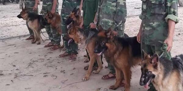 Huấn luyện chó nghiệp vụ đi săn