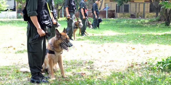 Huấn luyện chó sủa báo động