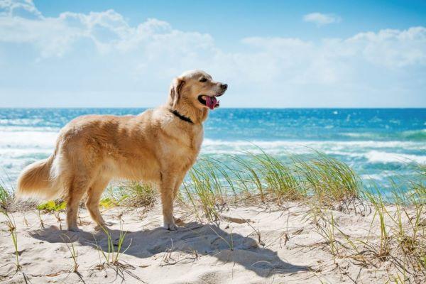 Huấn luyện chó tâp bơi để luôn đảm bảo an toàn cho chúng