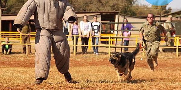 Huấn luyện chó nghiệp vụ cơ bản